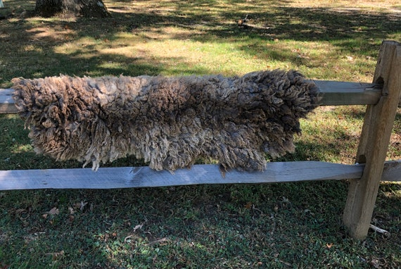 Felted Sheep Fleece