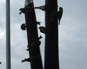 Jumbo Thistle Bird Feeder