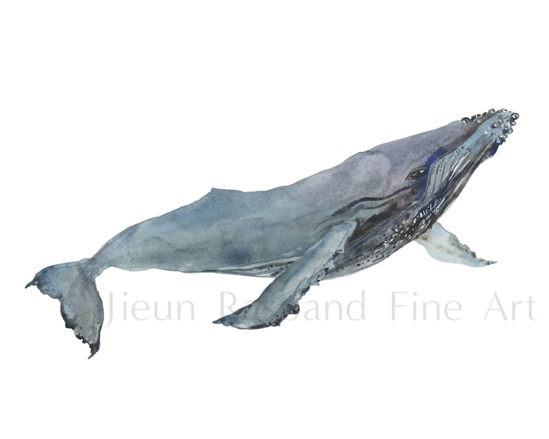 Feeling Free Humpback whale  Giclee print from original image 0