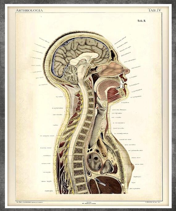 Vintage Anatomie Kunst alte medizinische Zeichnung Skelett | Etsy