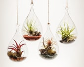 Wren's Nest Hanging Aerium  - Terrarium with Air Plant