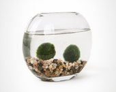 Moon Vase Marimo Set - Marimo Moss Ball Aquarium