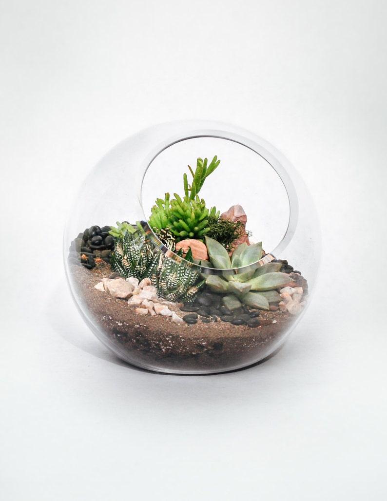 Succulent Terrarium 6 Glass Orb Terrarium With Etsy