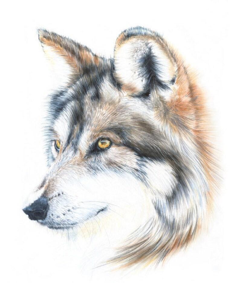 Рисунки волков прикольные