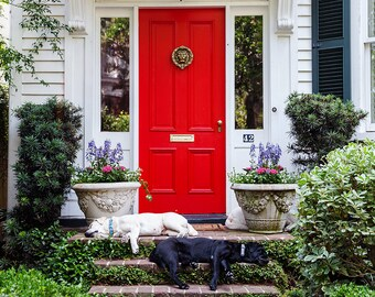Red Door and Labs on Church