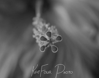 Photo Print, Black and White Flower Photograph, Art Photograph, Macro Photography, Home Decor, Nature Photo, Floral Photography Print
