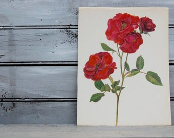 Red Rose Art, Shrub Rose, Botanical Art, Red Floral, Rose Wall Decor, Book Plate,  Floral Art, Vintage Roses, Red Botanical