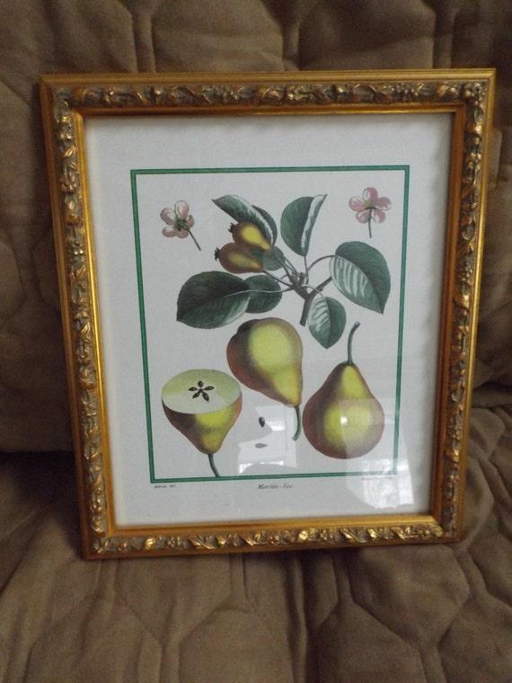 Vintage Framed Pear Print In Gold Frame Dining Room