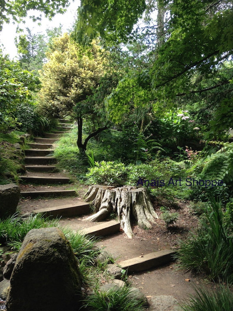 Going Up   The Path   Photo Of San Francisco Botanical Garden California,  Nature Photography Landscape, Photo Of Trees Rocks Stones Stairway
