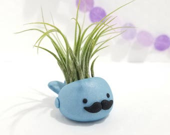 Mustache Whale Air Plant Holder, Air Planter, Desk Accessory, Mustache Whale, Gift for Him, Mustache Gift, fathers day gift, Whale Gift