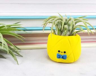 Pineapple Air Plant, Gift for Him, Pineapple Planter, Air Plant Gift, Gift for Her, Tropical Decor, Coworker Gift, Desk Accessory, Planter