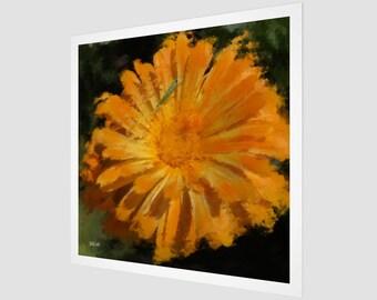 Orange Daisy Fine Art Print