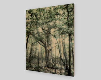 Enchanted Wood Print