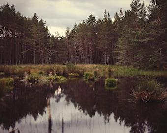 Ancient Caledonian Forest, original fine art photography, print, scotland, highlands, boat of garten, spey, cairngorms, landscape, water