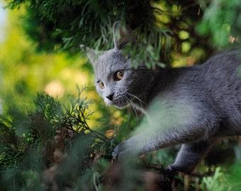 Simon 3, original fine art photography, print, cat, kitten, nature, 8x12,  animal, pet, wild, home, green, tree, plant, hungary, cute, young