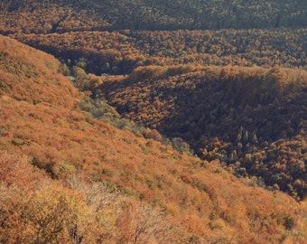 Bükk, original fine art photography, print, 8x12, hungary, mountain, hill, autumn, fall, trees, brown, leaves