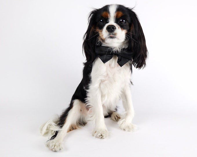 Bow Ties for Dogs: Black & White Velcro Back