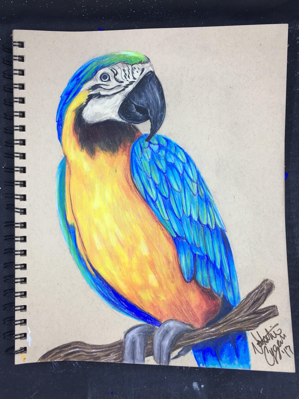 Dibujo Prismacolor guacamayo azul original | Etsy