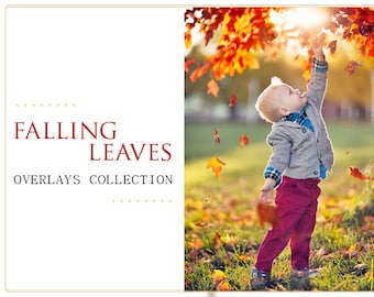 100 Leaves Photoshop Overlays PNG: Falling autumn tree leave effect, Natural Professional Photo Background Backdrops, Enhancement Tool