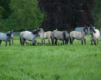 Horses in Paddock 3