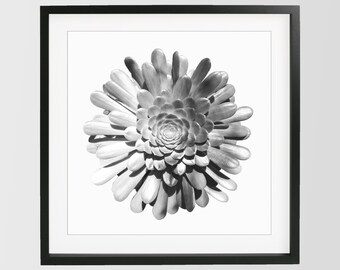 Succulent Photography Minimalist Black Print Wall Decor Downlodable Printable Art Modern