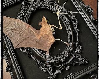 Taxidermy Half Skeleton Bat in a Medium Double Frame