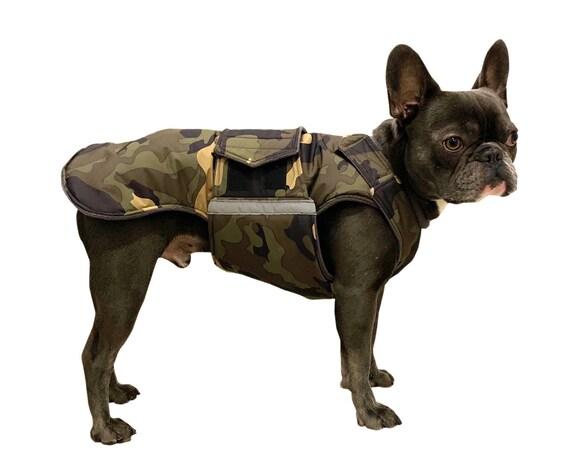 Franzosische bulldogge mantel im winter
