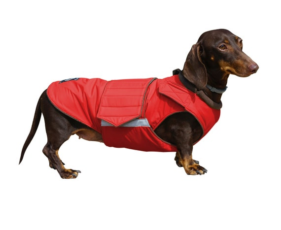10 Winter Coats that Fit Dachshunds | Ammo the Dachshund