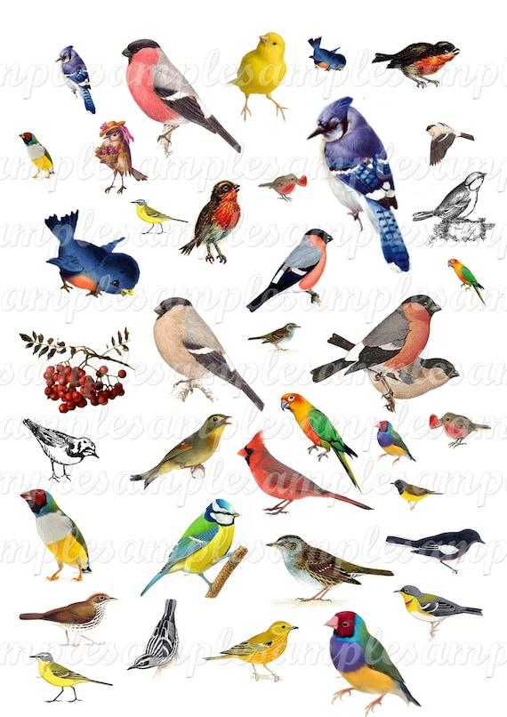 Images Digitales Oiseau Clipart Oiseau Images Numerique Etsy