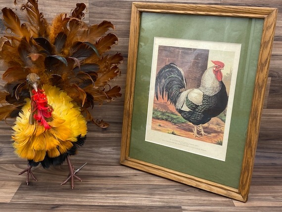 Vintage Chicken print, Matted Nature Wall art, Champion Rooster, rustic farmhouse decor, Country Kitchen