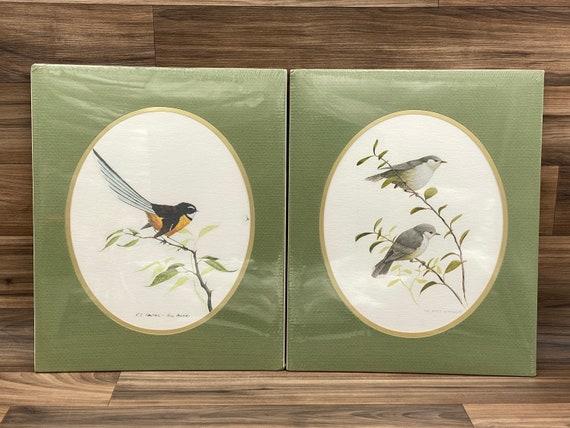 Bird prints by Artist Bill Howard, Matted Nature Wall art, Fantail Grey Warbler