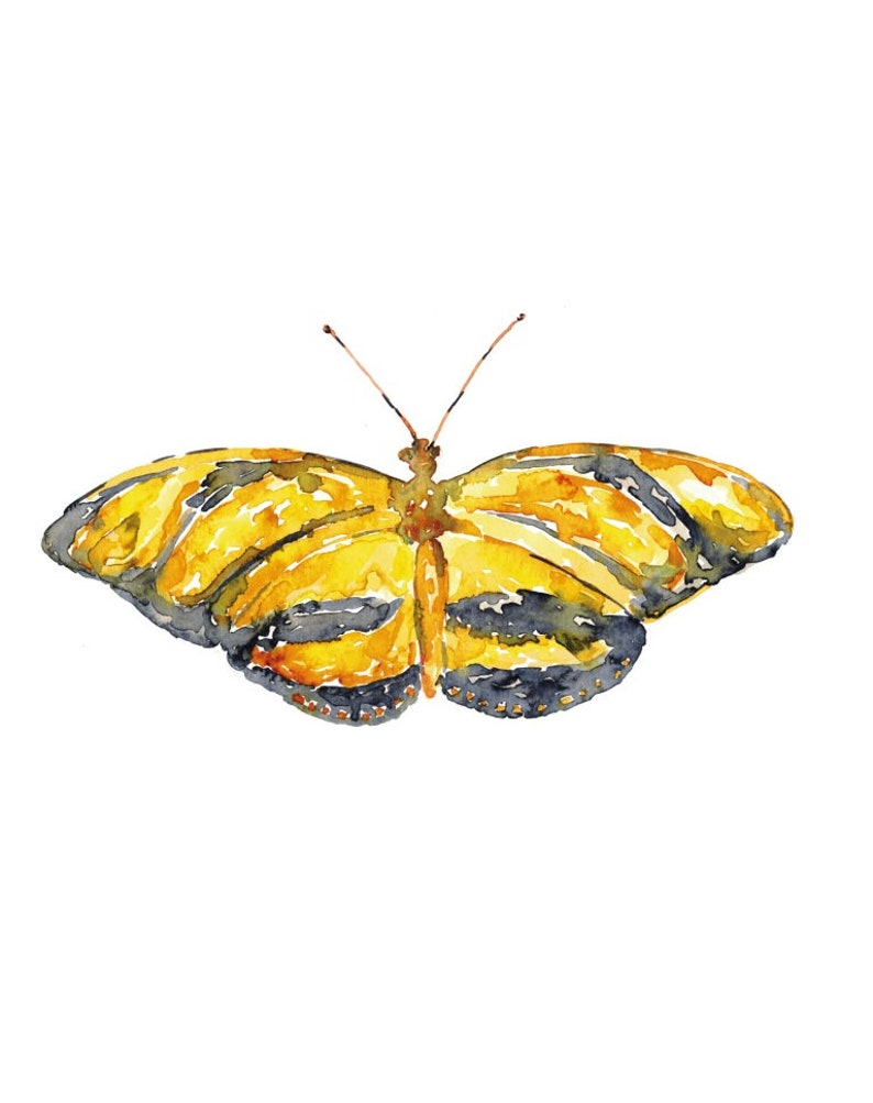 Heliconians butterfly painting watercolour bright colorful Wall Art Bug Biology Insect Illustration Print Nursery Moth Yellow Orange Black