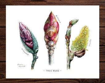 Tree Buds - Original Watercolor Art Print