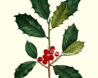 "Holly Print. Christmas Wall Art. 5x7"" 8x10"" 11x14"""