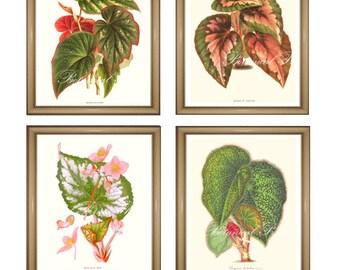 """Botanical Print Set. Foliage Begonia Prints Set. Foliage Prints. Begonias Wall Art Set.   5x7"""" 8x10"""" 11x14"""""""
