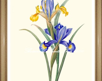 "Iris Print. Botanical Print. Botanical Wall Art. Blue Flower Print. 5x7"" 8x10"" 11x14"" 13x19"""