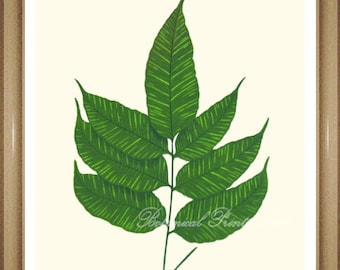 "Foliage Wall Art, Fern Print #13. Gymnogramma. Botanical Print, Ferns,  5x7""  8x10"" 11x14"""