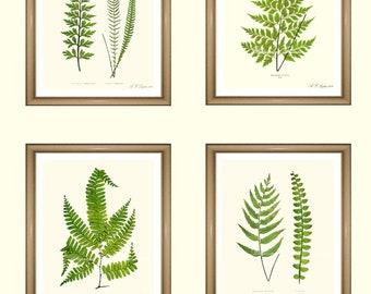 "Fern Prints.  Botanical Print Set. Any 4 fern prints. Ferns Wall Art. Fern print set.  5x7"" 8x10"" 11x14"""