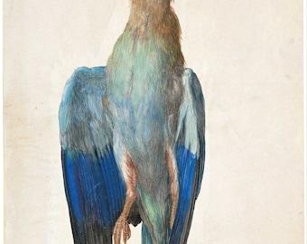 Albrecht Dürer: Dead Blue Roller. Fine Art Print/Poster (004391)