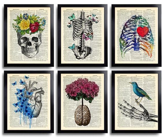 Anatomy Art Print Set 6 Medical Wall Art Anatomical Poster Etsy