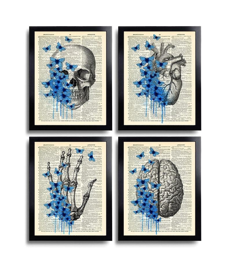 Anatomical Set Anatomy Print Set Of 4 Medical Wall Art Etsy