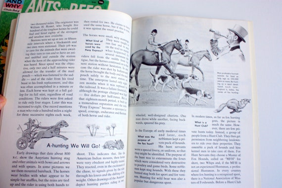 The How and Why Wonder Book of Horses, How and Why Ants and Bees, Wonder  Book of Ants and Bees , Wonder Book of Horses