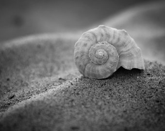 Lonely Sea Shell by Danny Jones, Black and White photography, Sea Shell, Home Decor, Shabby Chic