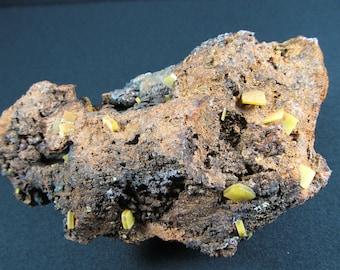 Yellow Wulfenite on Goethite - Mapimi, Mexico - Cabinet Specimen