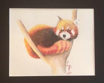 Red Panda Pencil Drawing Realistic Animal Prisma Color Office Art Veterinarian Gift Wall