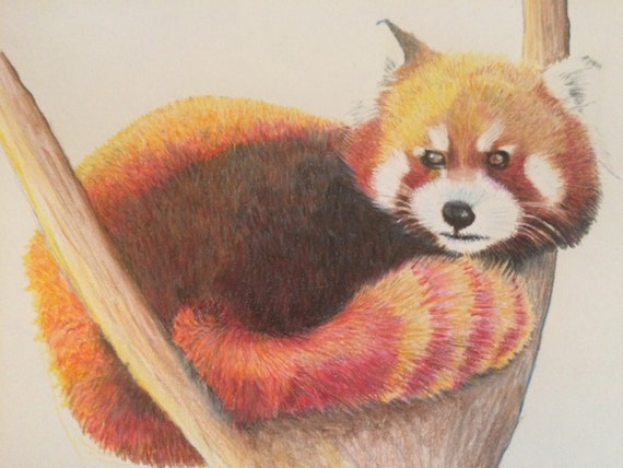 Red Panda Pencil Drawing Realistic Animal Drawing Prisma Etsy