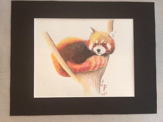 Panda Roux Dessin Au Crayon Dessin Animaux Réaliste Prisma Couleur Dessin Art Bureau Cadeau De Vétérinaire Art Mural