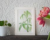 Money Tree Botanical Watercolor Original Painting 55 100 or apaintingaday Series