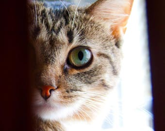 Staring Cat Photo Print // 7x10 // fine art photography