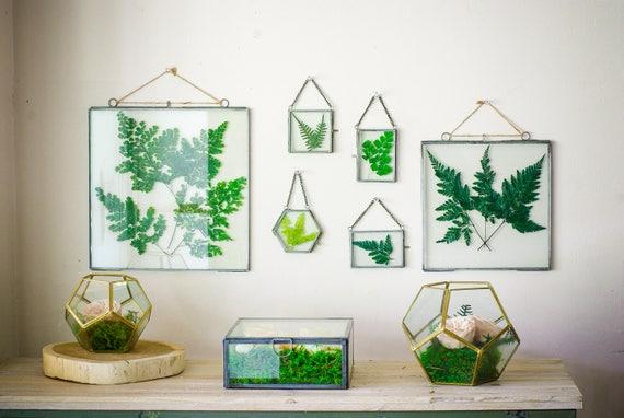 Glass botanical ferns frame, Preserved leaves, clear glass frames ...